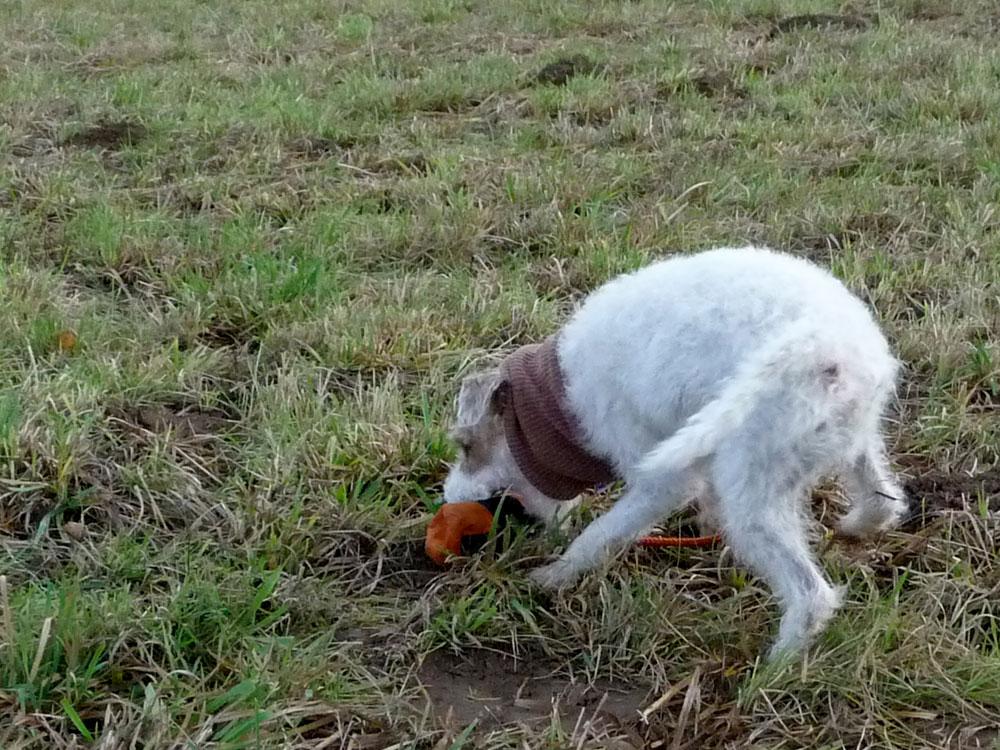 miteinander-hundetraining-anti-jagd-training1