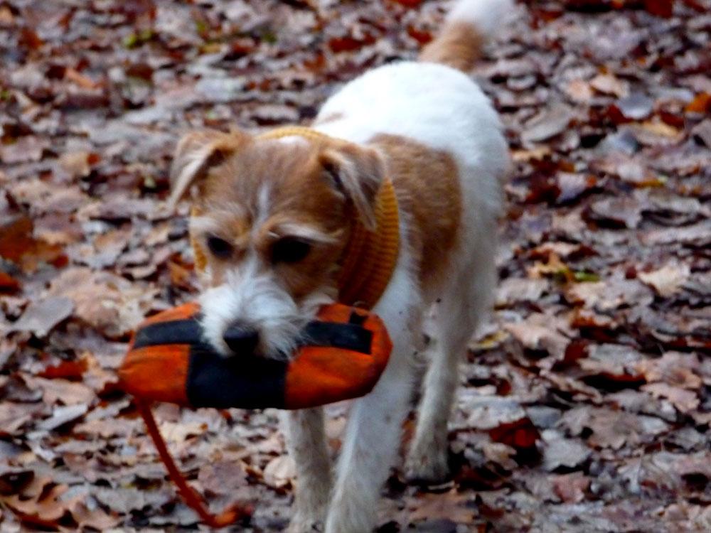 miteinander-hundetraining-anti-jagd-training2