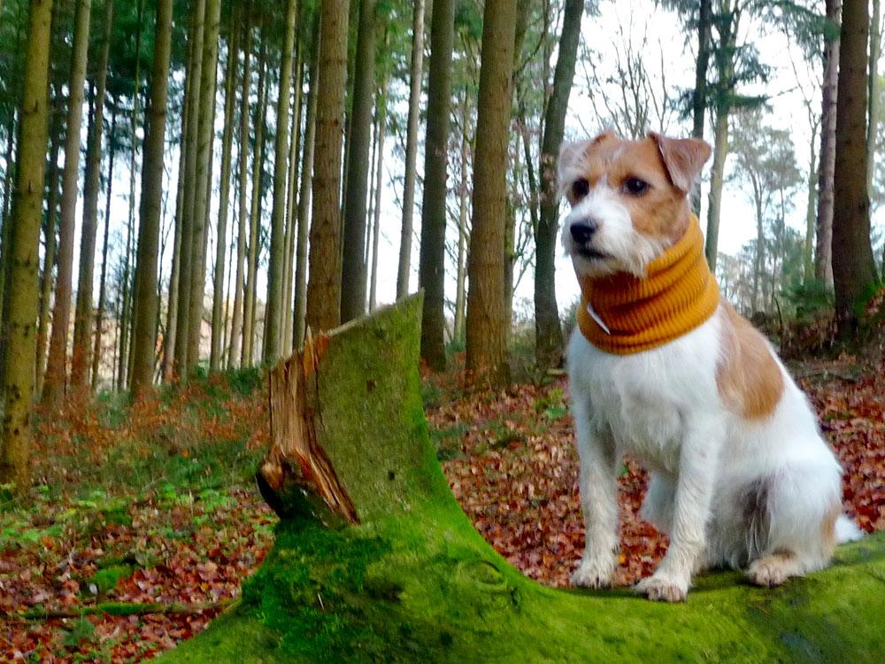 miteinander-hundetraining-anti-jagd-training3
