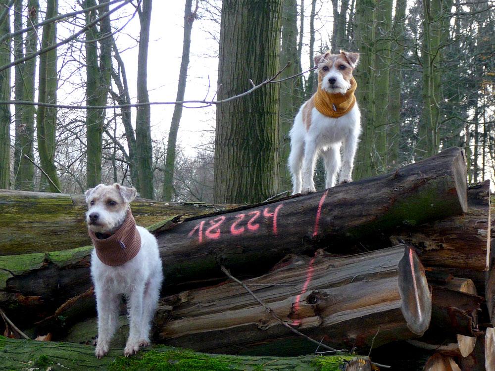 miteinander-hundetraining-einzeltraining2